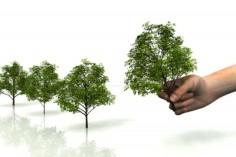 piantare_alberi